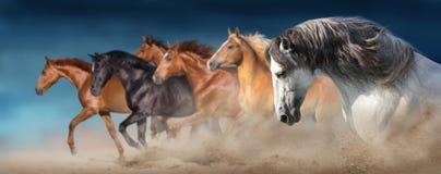 在沙子跑的马牧群 免版税库存图片