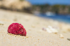 在沙子,努沙Lembongan的珊瑚 免版税图库摄影