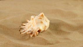 在沙子,自转,关闭的海洋贝壳 影视素材
