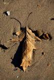在沙子紧贴的下落的叶子 免版税库存照片