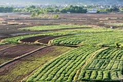 在沙溪村庄附近的露台的农田在云南 免版税库存图片