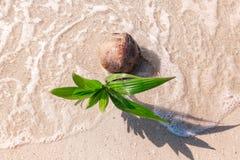 在沙滩的增长的椰子与波浪 顶视图 免版税库存照片
