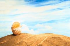 在沙滩的夏令时季节性,白色黄色贝壳有晴朗的五颜六色的蓝天背景和拷贝空间 旅行 库存图片