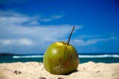 在沙滩的成熟椰子 免版税库存照片