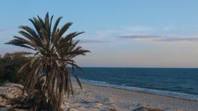 在沙滩的棕榈树在蓝色海环境美化 在夏天海海滩的棕榈 股票视频