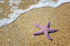 在沙滩的海星 库存照片
