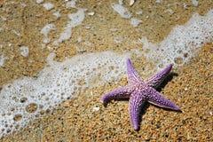在沙滩的海星 库存图片