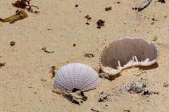 在沙滩的海胆外骨骼 库存照片