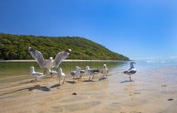 在沙滩的海鸥 免版税库存照片