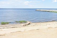 在沙滩的漂流木头 免版税库存照片
