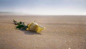 在沙滩的白色玫瑰在日落 库存照片