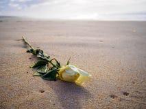 在沙滩的白色玫瑰在日落 图库摄影