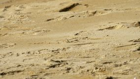 在沙滩的螃蟹 股票视频