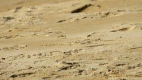 在沙滩的螃蟹 股票录像