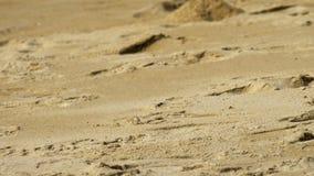 在沙滩的螃蟹 影视素材