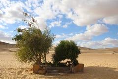 在沙漠中间的树 免版税库存照片