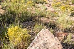 在沙漠叶子中的一个指向的推出的岩石 免版税图库摄影