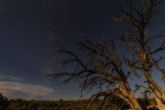 在沙漠在晚上在美国,两棵死的树 库存图片