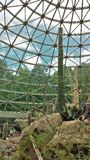 在沙漠展览的仙人掌在NC动物园 库存照片