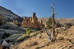 在沙漠峡谷的停止的结构树 免版税库存图片