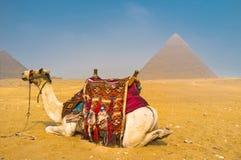 在沙漠放松 免版税库存图片
