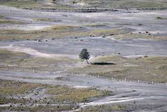 在沙漠的偏僻的树 免版税库存照片