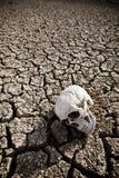 在沙漠的死亡 图库摄影
