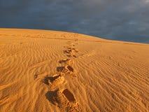 在沙漠的脚印 免版税库存图片