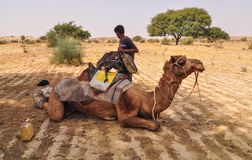 在沙漠的骆驼在Jaisalmer,印度 库存图片