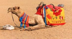 在沙漠的骆驼 免版税库存照片