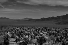 在沙漠的12月 免版税库存照片