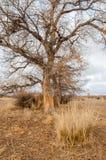 在沙漠附近 沙漠 干草原 免版税库存照片