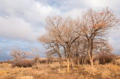 在沙漠附近 沙漠 干草原 免版税库存图片