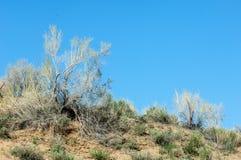 在沙漠附近 沙漠 免版税库存照片