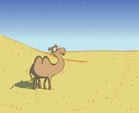在沙漠风景的骆驼 库存图片