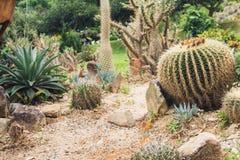 在沙漠风景的仙人掌 免版税库存图片
