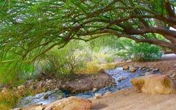 绿洲在沙漠 免版税库存图片