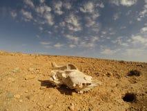 在沙漠 免版税库存图片