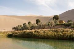 绿洲在沙漠 库存照片