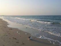 在沙特阿拉伯的波斯湾海滨在建造场所附近 免版税库存图片