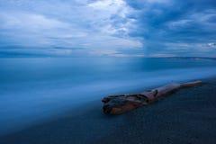在沙滩在南海岸,李子点,牙买加的漂流木头 库存照片
