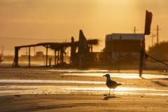 在沙滩海岸线的海鸥日落风景风景的 免版税库存照片