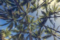 在沙滩的可可椰子树在Kapaa夏威夷,考艾岛 免版税库存照片
