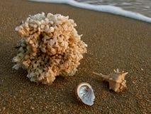 在沙滩的海壳 免版税库存照片