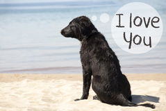 在沙滩的狗,发短信我爱你 库存图片