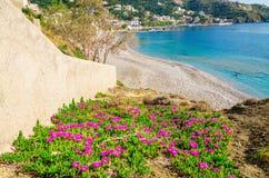在沙滩的花与清楚的蓝天,希腊 免版税库存图片