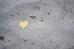 在沙滩的黄色心形的叶子 库存图片
