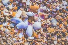 在沙滩的Seashels 海暑假背景 免版税库存图片
