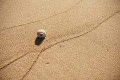 在沙滩(鳕鱼角,马萨诸塞,美国/2013 11月30日的一个贝壳) 库存照片