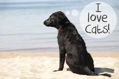 在沙滩,文本的狗我爱猫 库存照片